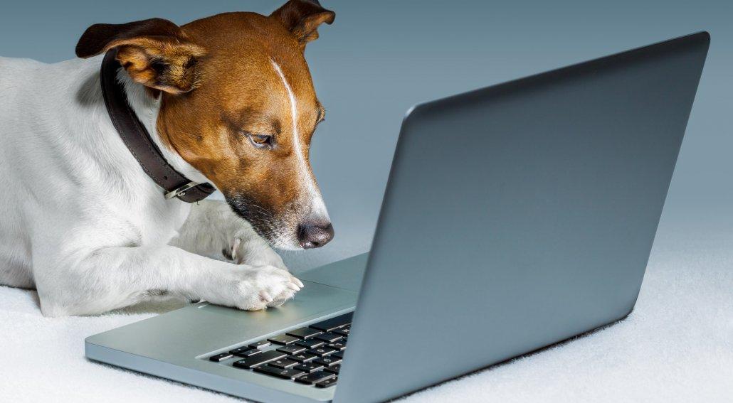 softwares-veterinarios